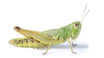 Grasshopper porting virtual numbers